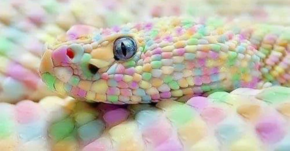 candy_snake