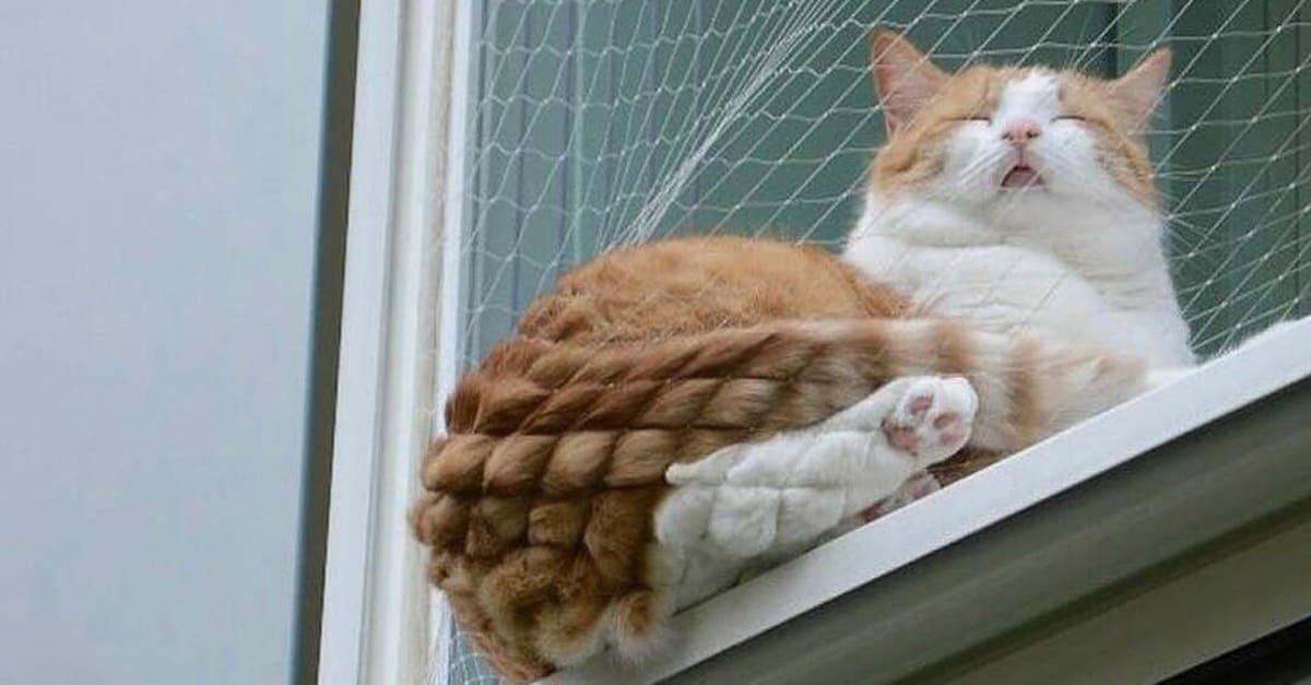 ham_cat