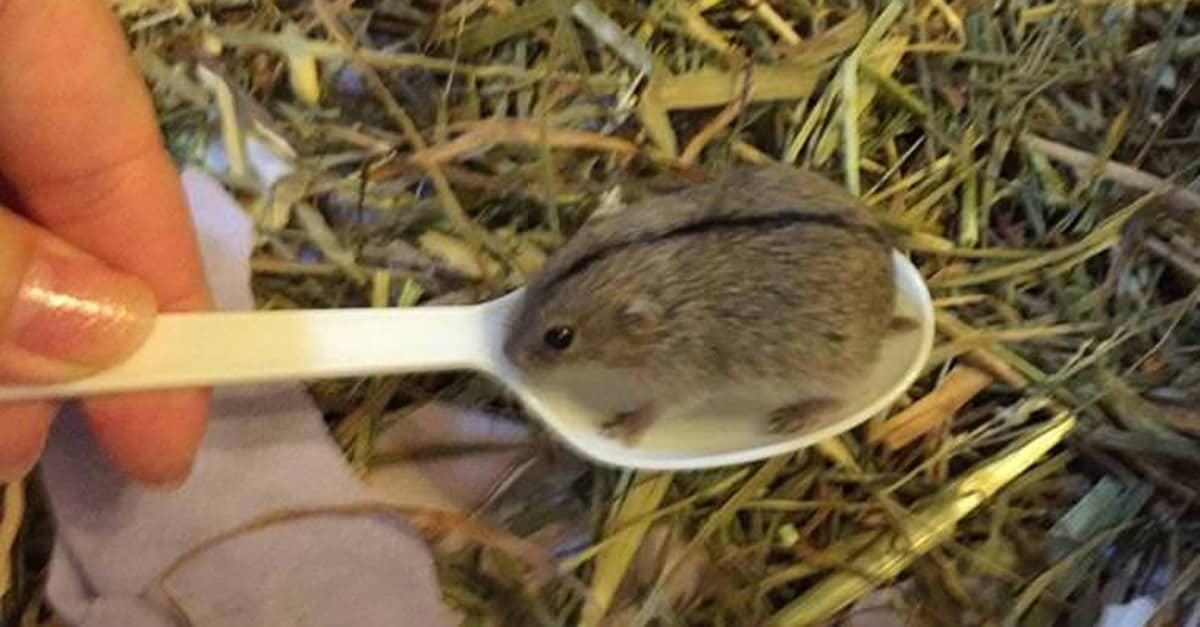 mouse_spoon