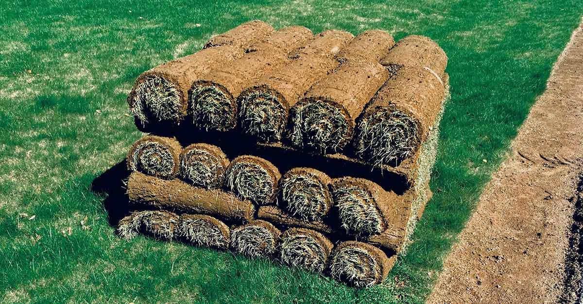 bale_grass
