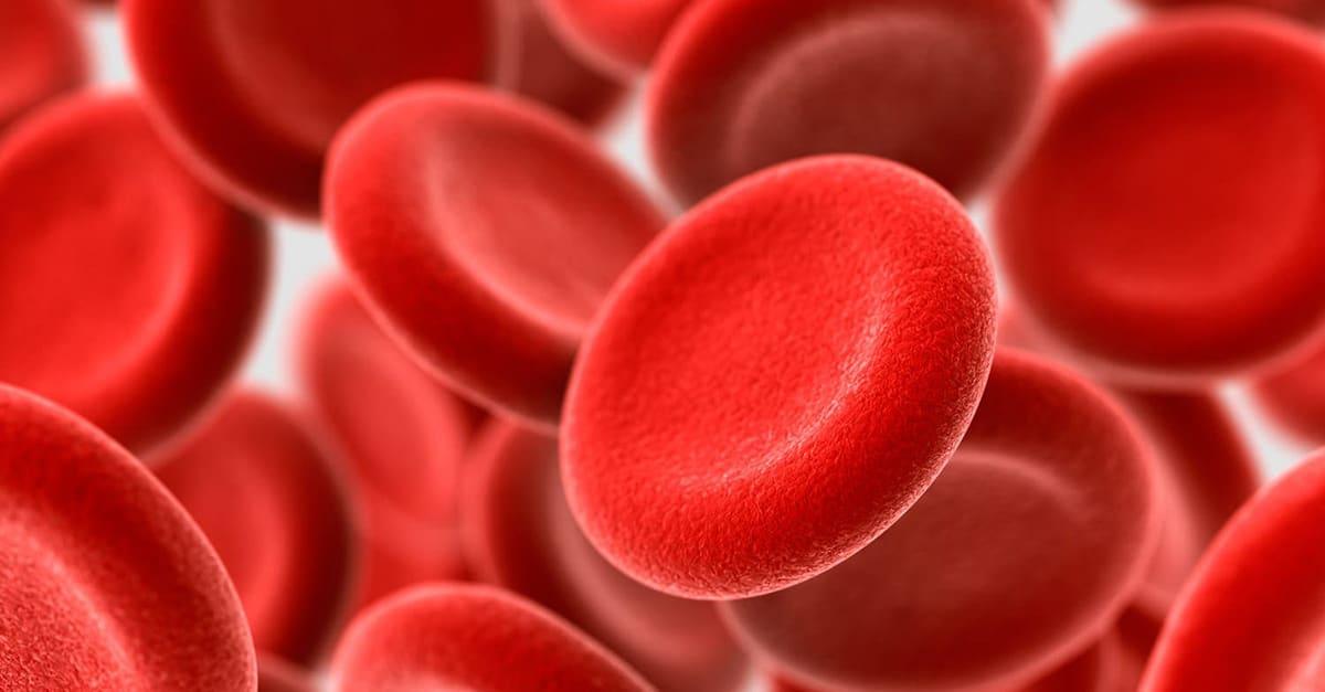 pepperoni_blood_vessel