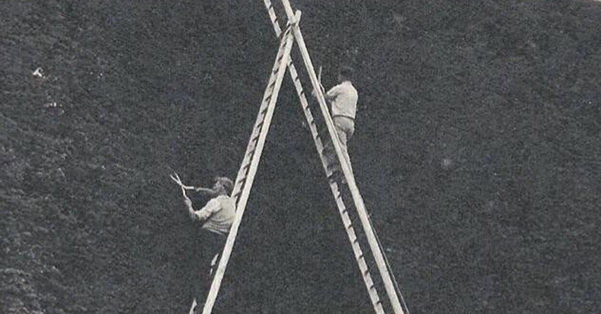 trimming_hedge_ladder